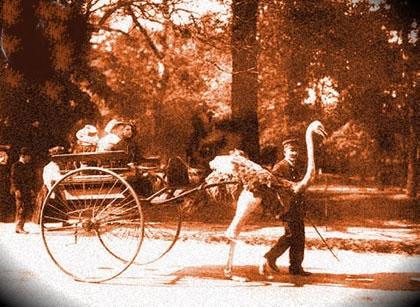 Carro con avestruz