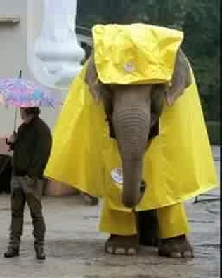 Elefante con chubasquero