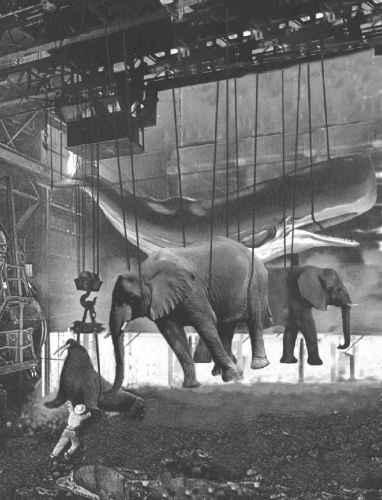 Elefantes colgados