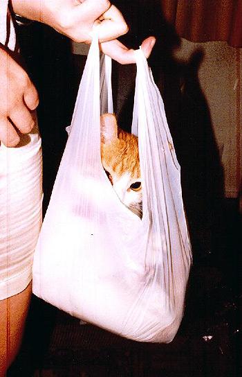 En la bolsa