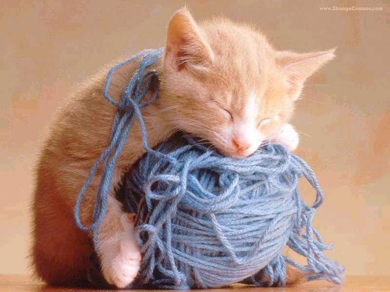 Gatito y ovillo