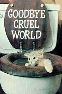 Gato suicida