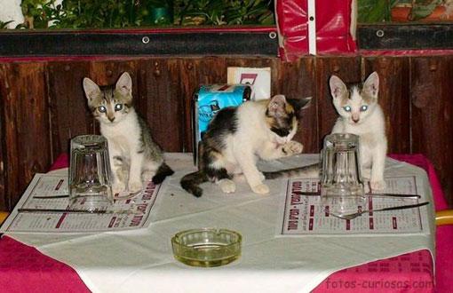 Trio felino