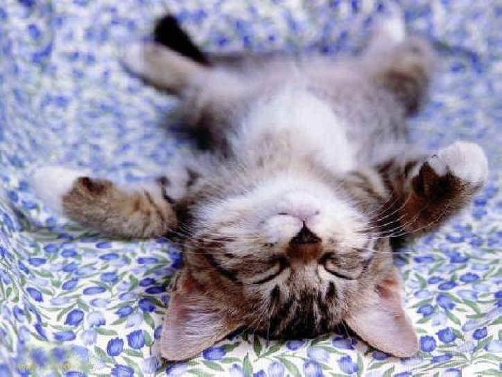 Gatito espatarrao