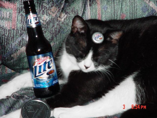 Gato-Lite