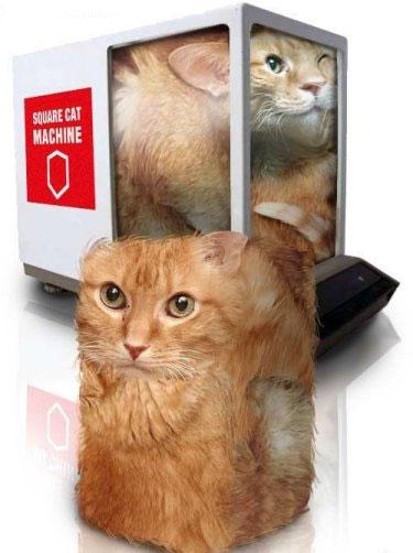 Gato-cubo