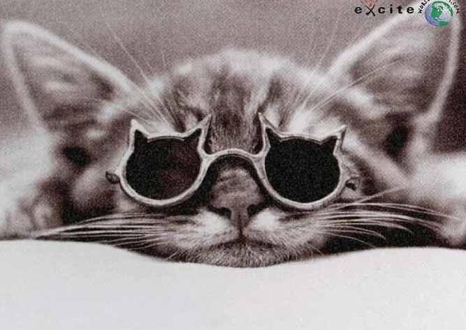 Gato-in