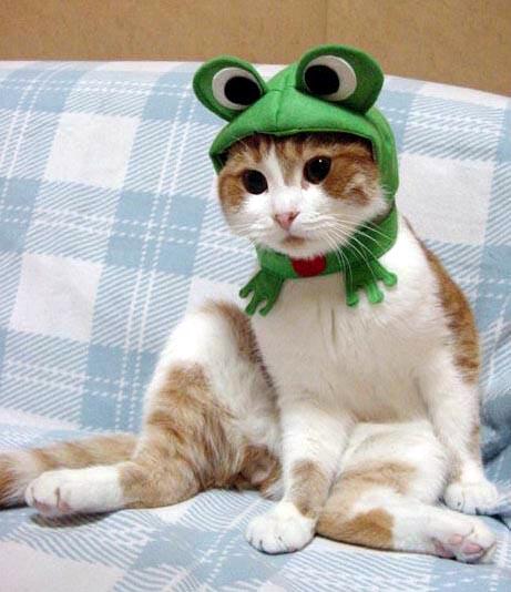 Gato con disfraz 1