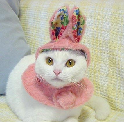 Gato con disfraz 2
