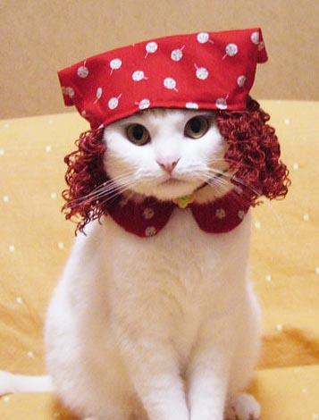 Gato con disfraz 3