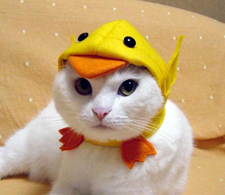 Gato con disfraz 4