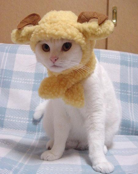Gato con disfraz 5