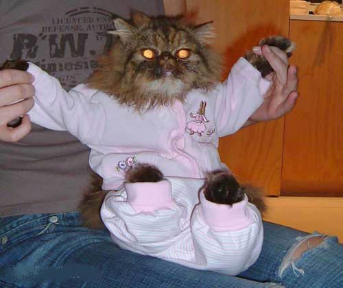 Gato con pijama