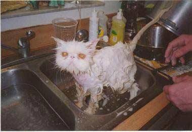 Gato limpio
