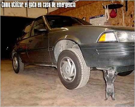 Gato para emergencias