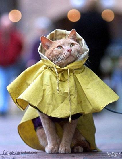 Gato protegido