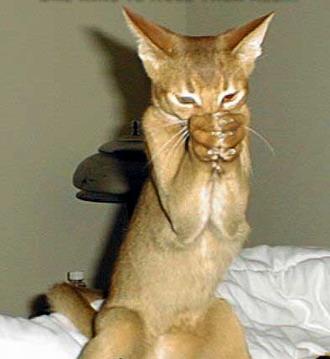 Gato rezando