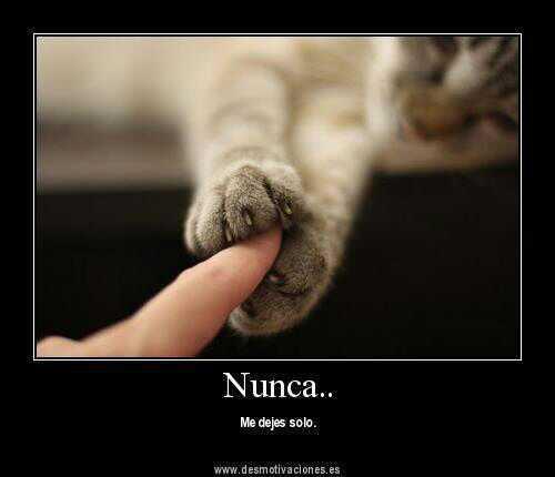 Gato y dedo