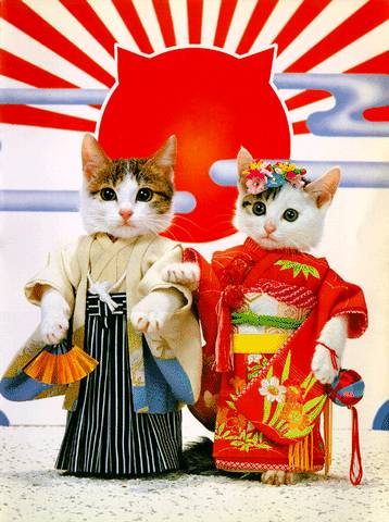 Gatos nipones