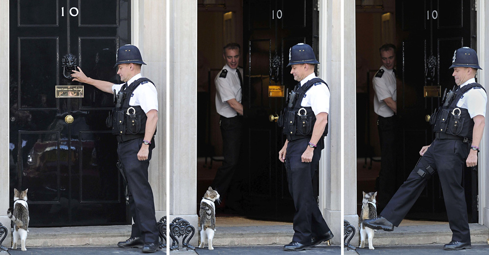 Larry 10 Downing Street