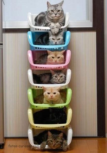 Pila de gatos