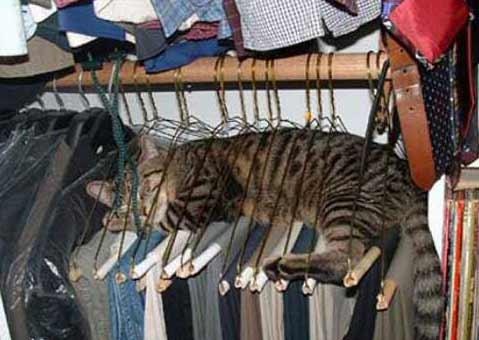 gato dormilon