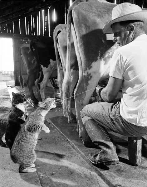 gato leche