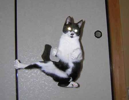 karate kat