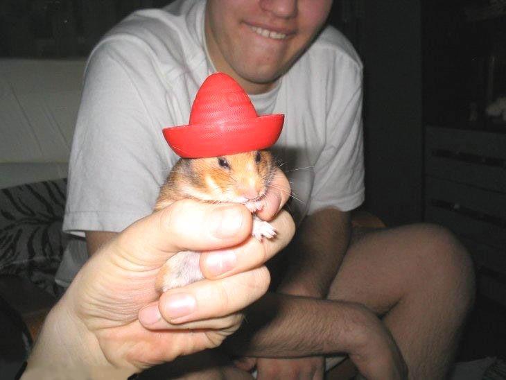 Hamster con sombrerito