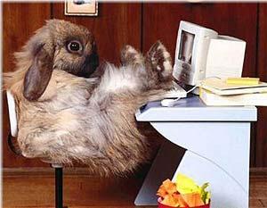 Conejo informatico