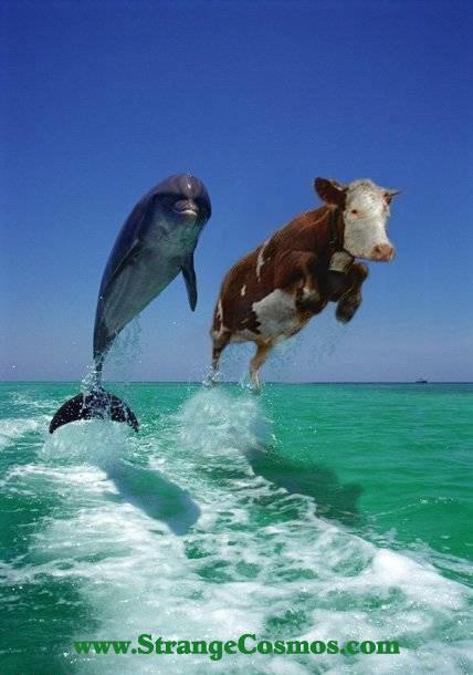 Delfin y vaca