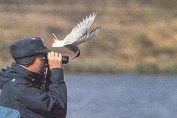 El ornitologo