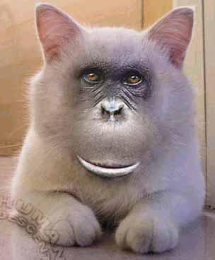 Mono-gato