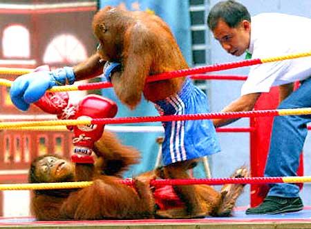 Combate de monos