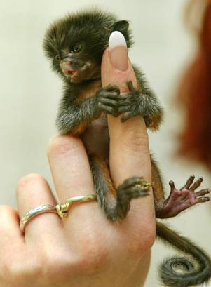 Mini mono