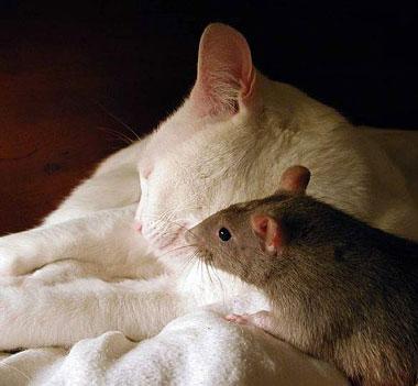 Gato y ratoncillo