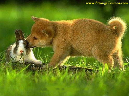 Perrito y conejito