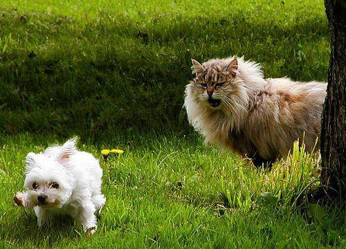 Perrito y gatazo