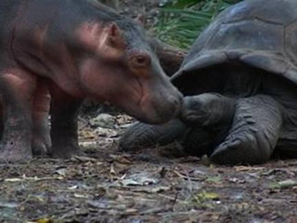 Tortuga e hipopotamo 1