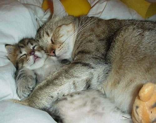 abrazaditos gatos