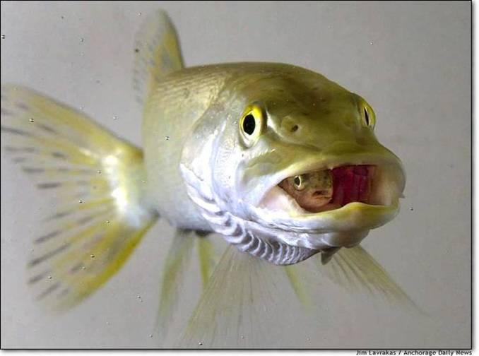 Pez en pez