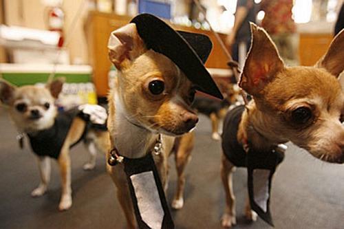 Concurso canino 1
