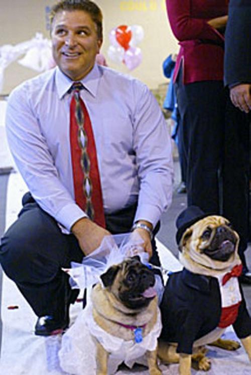 Concurso canino 3