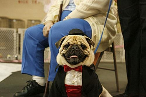 Concurso canino 5
