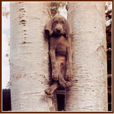 PErro entre troncos