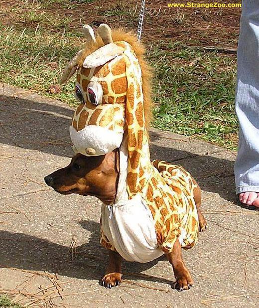 Perro-jirafa