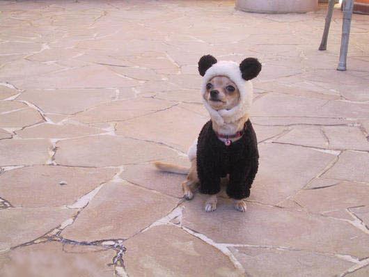 Perro Mickey