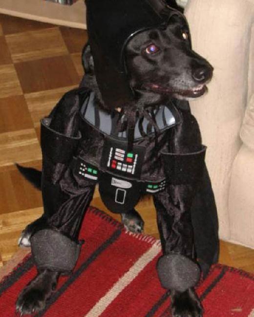 Perro de las Galaxias
