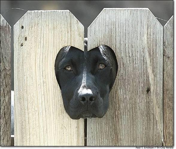 Perro y valla