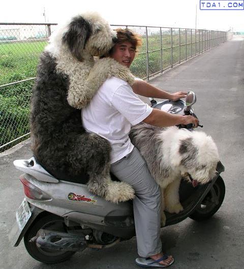 Tres en una moto